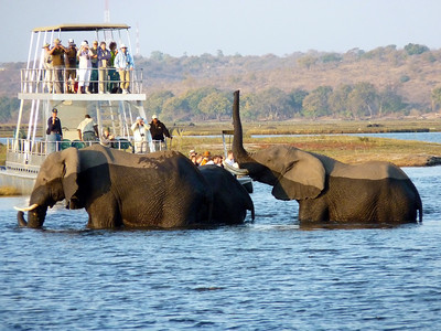 First, three large elephants crossed