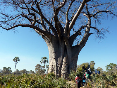 We hiked around a giant baobab tree near the camp