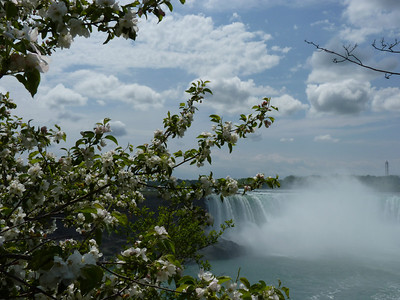 Flowering trees and the horseshoe shaped falls