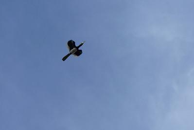 Hornbills Abound