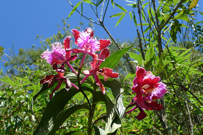 Orchids found low on Montaña Machu Picchu