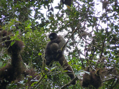 Great views of monkeys - this one has a baby